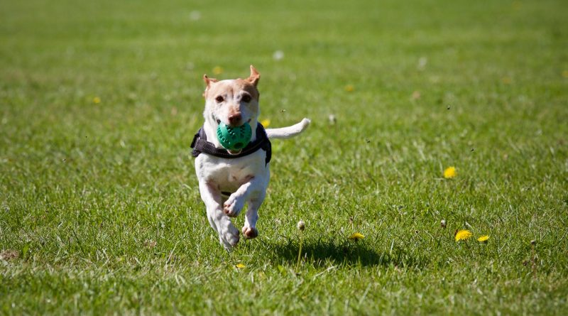 Need to keep your dog busy? Try these recipes for stuffing chew toys! tiresandtails.com