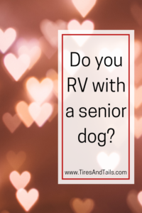Traveling with a senior dog in an RV