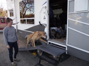 Traveling Full Time In An Rv With A Senior Dog