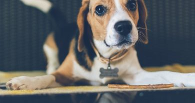 Pet Identification: A Must for Pets Who Travel