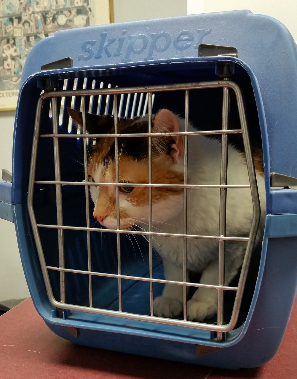 Transport your pets in a carrier to keep them safe during an emergency evacuation. TiresAndTails.com