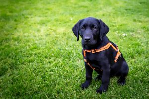 Bringing a puppy into your life as a full-time RVer can be rewarding. TiresAndTails.com