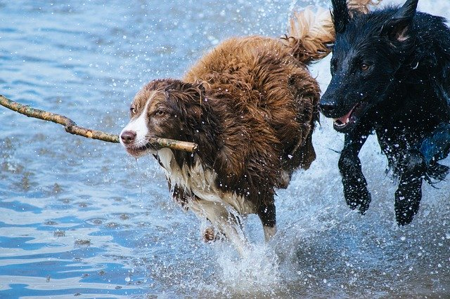 If you get a dog, give it lots of exercise.