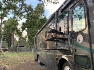 Cats in enclosure connected to Tiffin motorhome