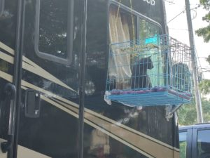 Cat in wire enclosure attached to motorhome